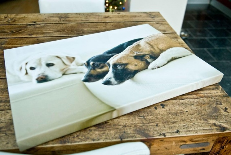 Canvasdoek hond